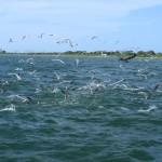 Tampa bay fly fishing charter