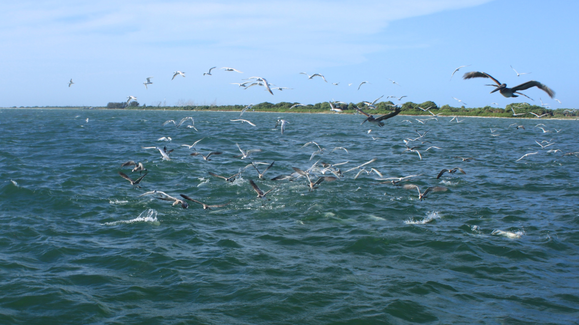 Tampa fly fishing charters for Fly fishing charters