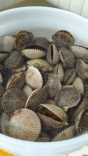 river crystal scallop charters