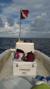 scallop trips charter homosassa