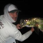 Tarpon Fishing charter Tamp