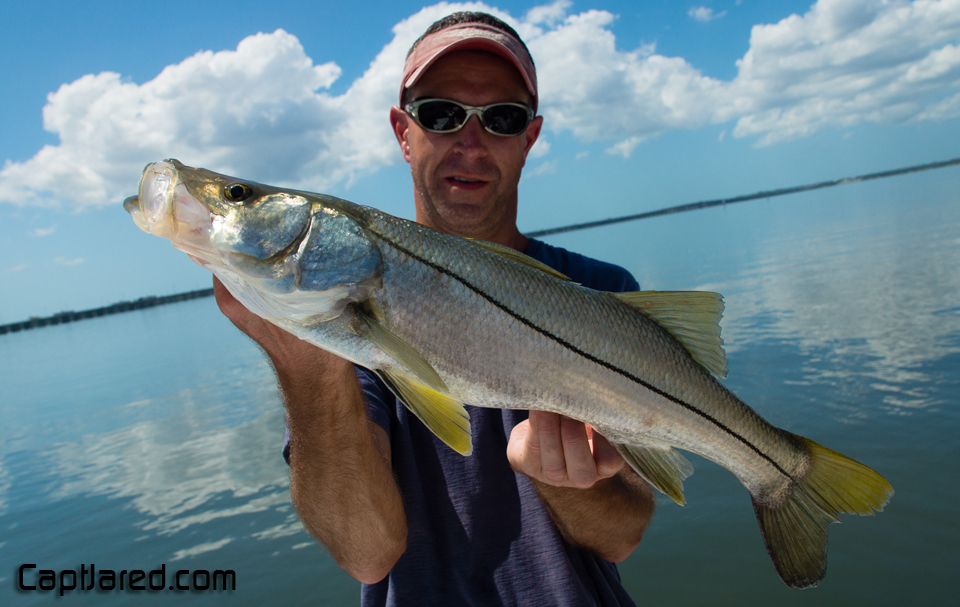Tampa fly fishing charters for Charter fishing tampa