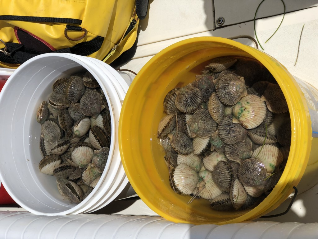 Homosassa Scallop Trip Guide Tours