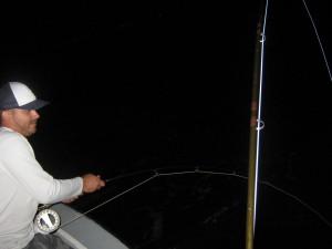 tarpon fly fishing charter tampa bay