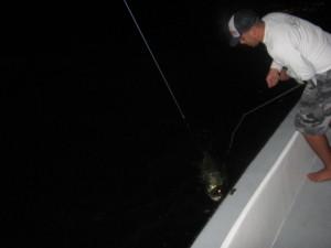 night tarpon fishing charters tampa