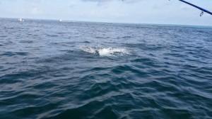 tarpon fishing charter tampa bay