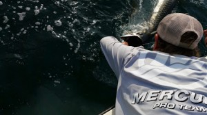 tarpon fishing charter tampa bay