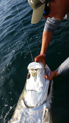 2014060tarpon fishing charter tampa bay7_084954