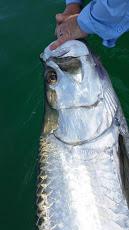 tarpon fishing charter tampa