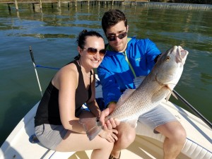 Big red drum caught while fishing near seminole boat ramp on clearwater fishing tour