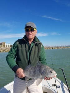 Black Drum Caught while on a fishing guide trip near Clearwater beach, fl