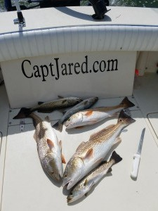 Fresh fish dinner on st.pete beach fishing charter guide service