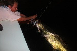 night tarpon fishing charter tampa bay