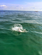 tampa bay tarpon fishing charter