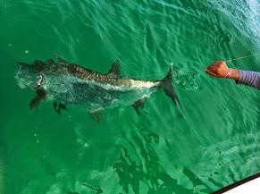 tampa tarpon fishing charter
