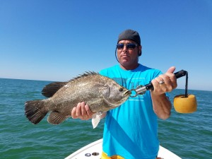 John big triple tail caught on a fishing trip with on clearwater beach