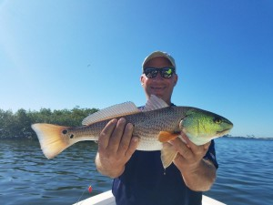 Kev with a Palm harbor Redfish on a fishing tour