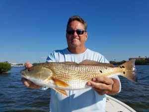 Palm harbor redfish guided fishing tours and trips