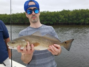 Redfish caught while on a fishing guide tour in safety harbor