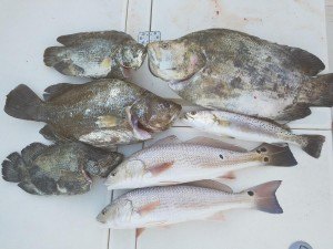 Triple tail and Redfish on a fishing charter in Dunedin florida