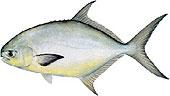 tampa fishing charter guide