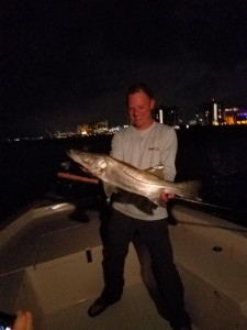 snook fly fishing charters in clearwater beach st.pete